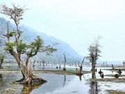 Morning dew, floating trees instil a sense of calm at Noong Lake