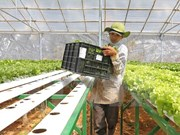 Japanese firm to develop organic vegetable project in Ha Nam