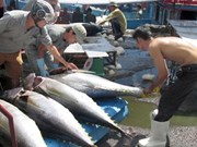 Tuna export value drops nearly 7 percent