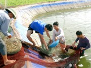 Nam Dinh: Local farmers trained in good agricultural practices