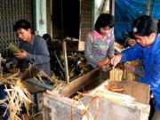 "International agencies help Thanh Hoa develop ""luong"" bamboo"