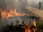 Number of hot spots in Indonesia drops
