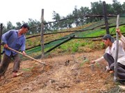Measures to reduce land erosion in Dak Lak province