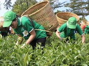Lam Dong province seeks market for tea