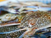 Kien Giang moves to protect blue crab resources