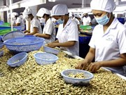 HCM City to hold international cashew conference