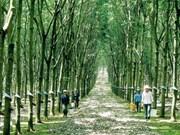 Vietnam, Japan produce carbon-free rubber
