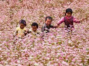 Ha Giang promotes buckwheat flower fest in Hanoi