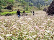 First buckwheat festival opens in Ha Giang