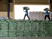 First batch of rice to arrive in Indonesia next year