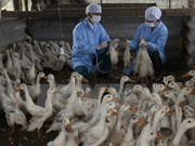Health sector warns of renewed bird flu threat