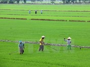 Better Rice initiative to help Mekong farmers