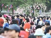 Japanese cherry trees to bloom in Hanoi