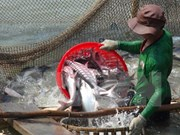Vietnam disappointed about US's inspection on tra, basa fish