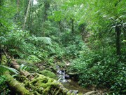 Forest sector support partnership to focus on climate change