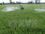 Project destroys Vietnam's pesticide stockpiles