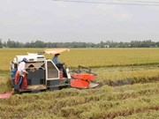 Nam Dinh fosters agriculture cooperation with Japanese locality