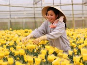 Da Lat plants more than 1,000ha of flowers