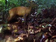 Rare animals found in Pu Hu Nature Reserve