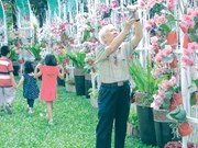 Floral fairs colour HCM City for Tet