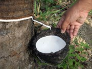 Thailand buys rubber from growers amid price slump