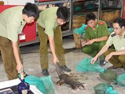 ENV declares war on pangolin crime