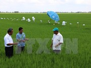 Global sustainable rice production criteria applied in Vietnam