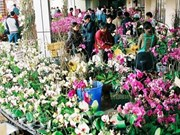 Hanoi's Quang An flower market busier ahead of Tet