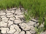 MARD gives financial support to drought, salinity recovery