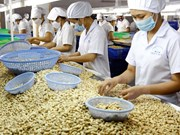 Binh Phuoc, Ivory Coast cooperate in cashew sector