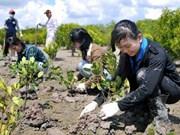 Cold weather blamed for hampering afforestation effort