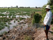 Mekong Delta provinces tackle saltwater intrusion