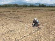 Saltwater intrusion worries Mekong Delta farmers