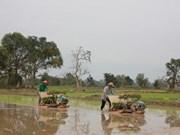 Laos plans to export 1 million tonnes of rice