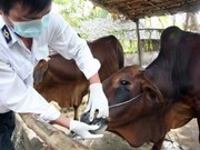Localities asked to allocate funds for foot and mouth disease control