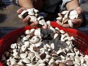 Binh Thuan temporarily bans exploitation of mollusc, bivalve at sea