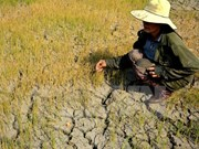 Drought-hit localities supported to address consequences