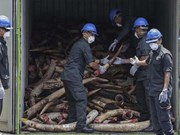 Malaysia destroys nearly 10 tonnes of ivory