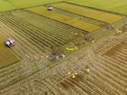 Vietnam's agriculture to profit from TPP: Argentine paper