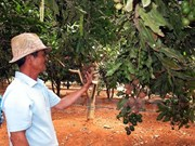 Vietnam Macadamia Association established