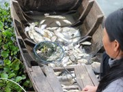 More efforts put in search of cause of mass fish death