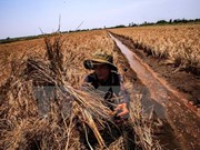 Drought causes 400 mln USD losses