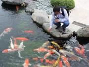 HCM City eyes 50 million USD in ornamental fish exports