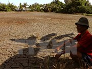 Ca Mau supports farmers to prepare for summer-autumn crop