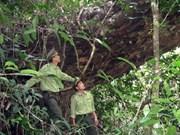 Nature preservation in Central, Central Highlands needs overhaul