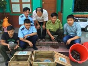 Pangolin smugglers to face up to 15 years in jail