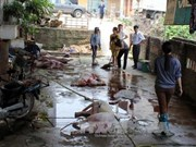 Ho Chi Minh City to clear out substandard slaughterhouses