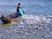 Mekong Delta sustainable development solutions identified