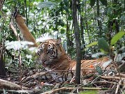 Indonesia plans to increase jail time for wildlife poachers, traders