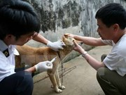 Localities asked to take measure to prevent rabies